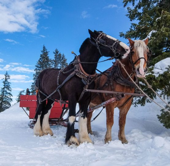 Horses on Methow Cross-Country Ski Tour