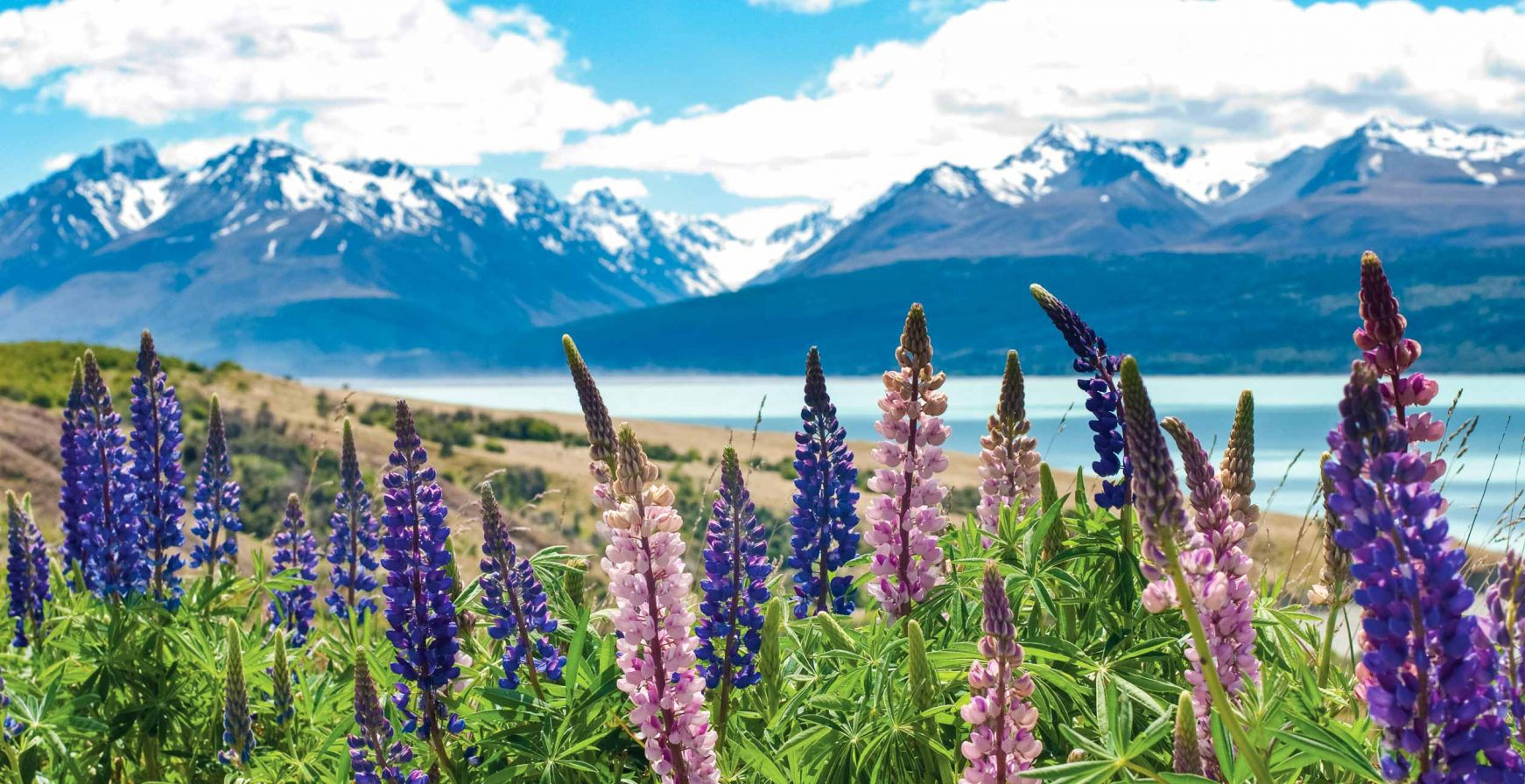 Flowers by mountains on New Zealand Bike Tour