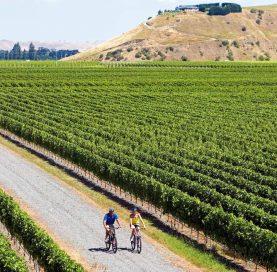 Bikers by vineyard on New Zealand Bike Tour