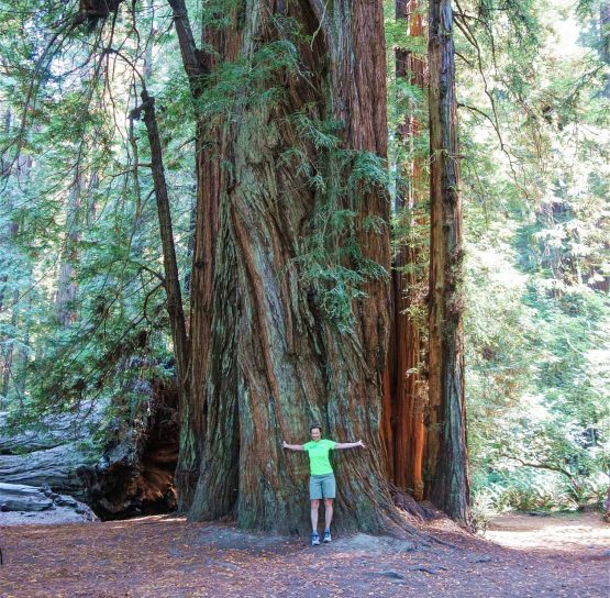 Person by giant tree on Oregon Coast to Crater Lake Bike Tour