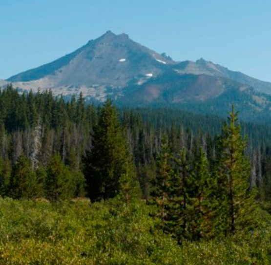Pine trees and mountains on the Oregon Crater Lake Bike Tour
