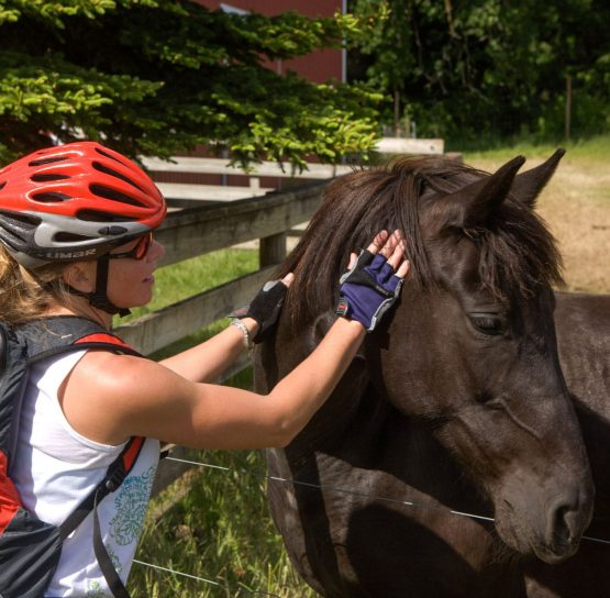 Biker petting a horse on Oregon Wine Country Tour
