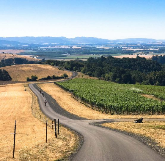 Road and vineyard on Oregon Wine Country Tour