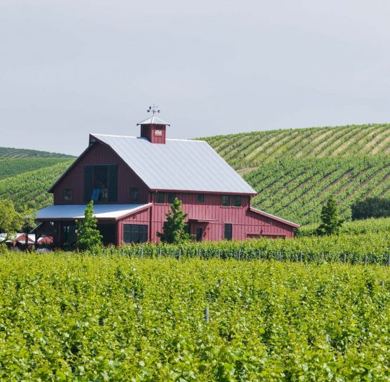 Bard and vineyard on Oregon Wine Country Tour