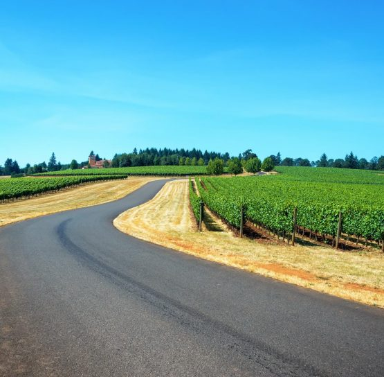 Road on Oregon Wine Country Tour