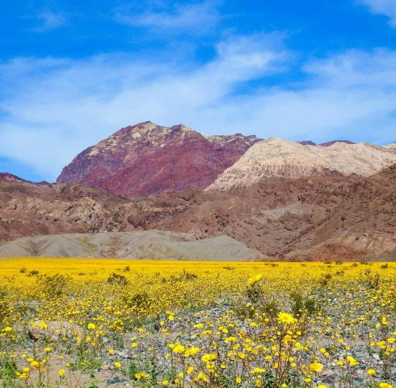 Flowers and mountains on the Valley of Fire and Death Valley tour