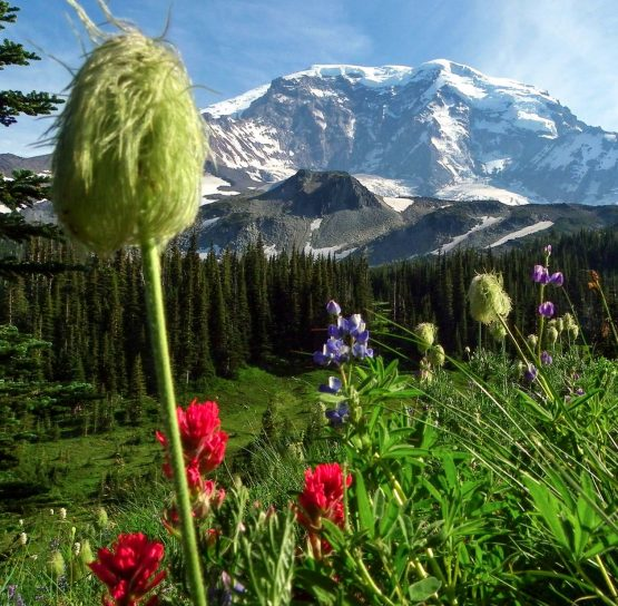 Flowers and mountains on the Volcanoes of Washington Tour