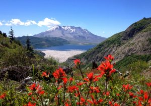 Wildflowers on Bicycle Adventures' Mt. Rainier National Park Hiking Tour. Photo: Guide Chad Maurer