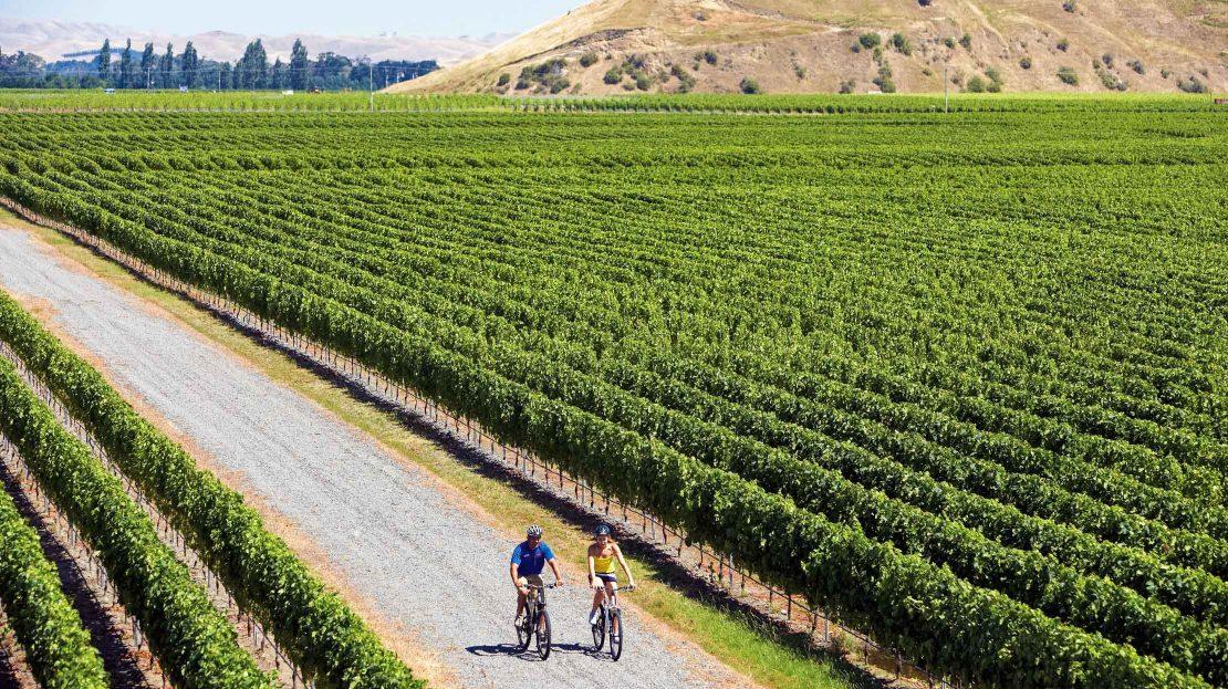 Biking through a vineyard
